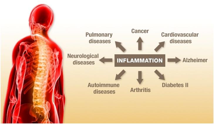 1- News | BIOM Probiotics | Sarasota | Microbiome's health | Microbiome