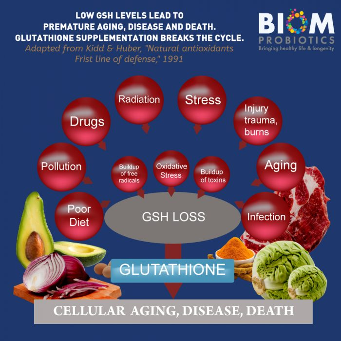 Gut Microbiome Human Health Probiotics | Biom Probiotics | Probiotics | L-Glutathione + Probiotic Suppository