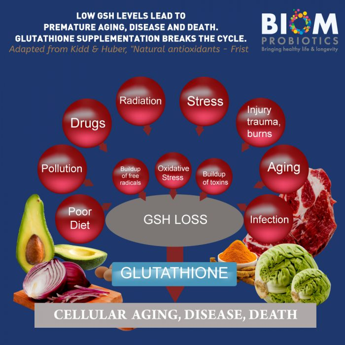 Gut Microbiome Human Health Probiotics | Biom Probiotics | Probiotics | High Potency Glutathione Probiotic Suppository