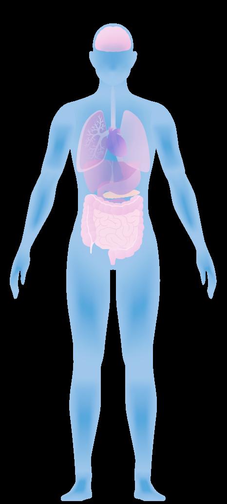 1- Healthy Balanced Microbiome | Human Microbiome | Biom Probiotics
