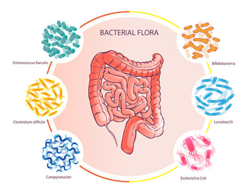 From Biome to BMI: Your Gut, Inside and Out