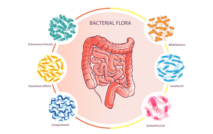 1- From Biome to BMI: Your Gut, Inside and Out